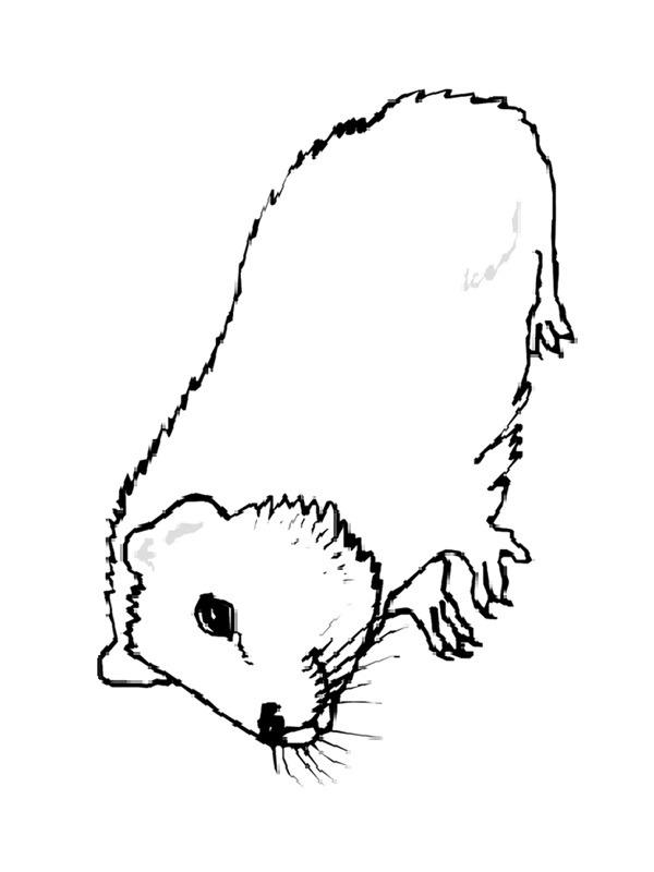 Ausmalbilder Meerschweinchen Besteausmalbilder De