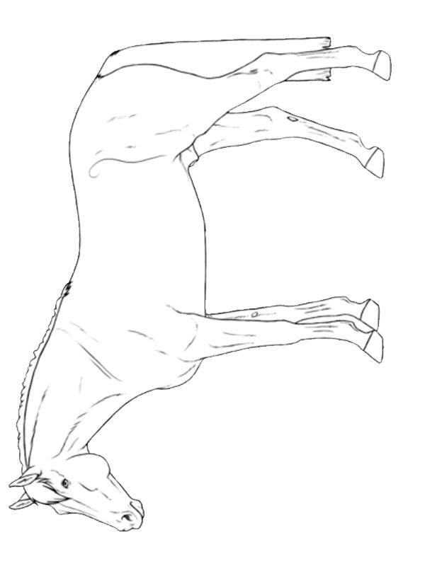 ausmalbilder pferde hannoveraner  ausmalbild araber pferd